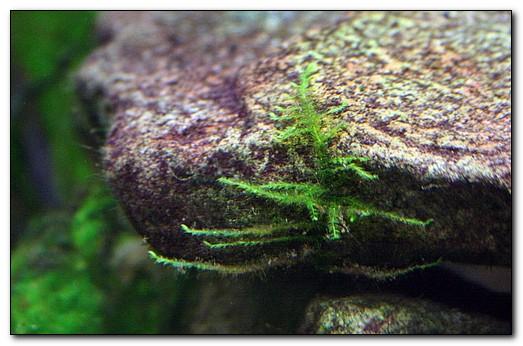 вредные водоросли в аквариуме