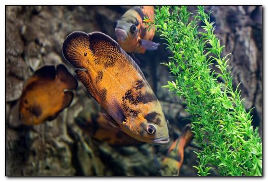 Какие бывают водоросли в аквариуме