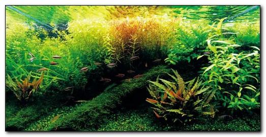 как бороться с водорослями