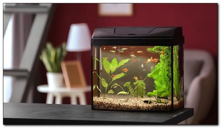 Нужна ли крышка аквариуму