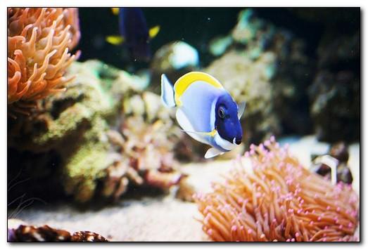 какие рыбы подходят для настенного аквариума