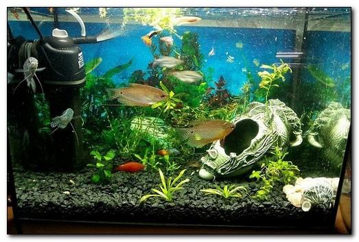 Должен ли фильтр в аквариуме работать постоянно ?