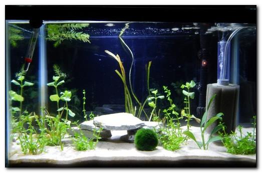 Виды фильтров для аквариума