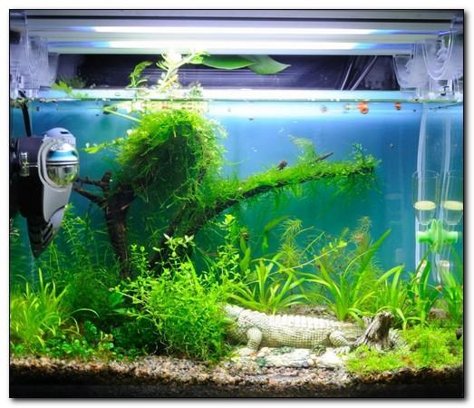 внутрение фильтры для аквариумов