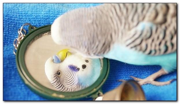 Важные моменты при выборе игрушек для попугаев