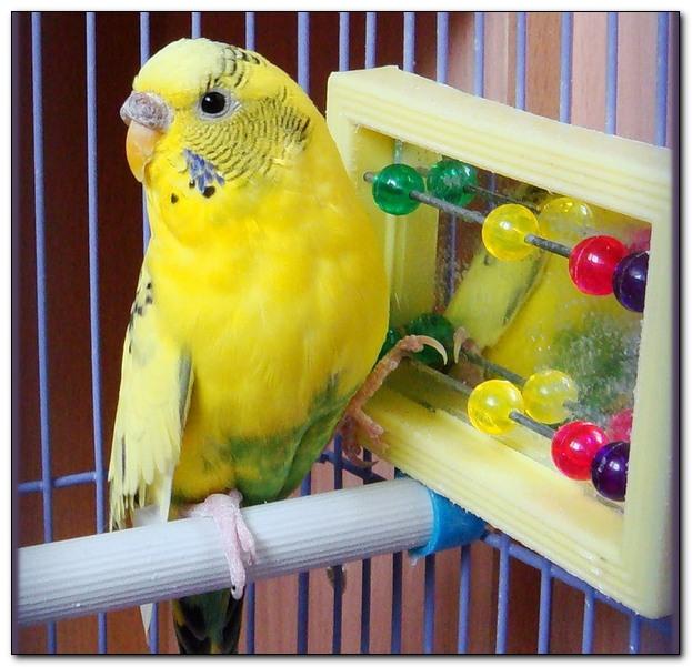 Уход за игрушками для попугаев