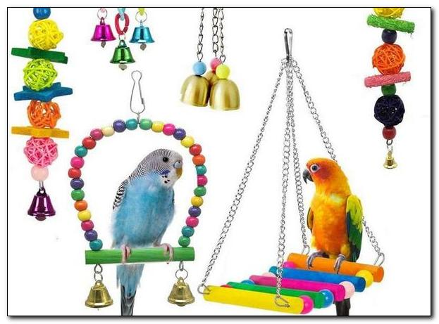 Популярные виды игрушек для попугаев