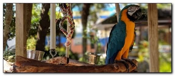Чем оборудовать клетку для попугая