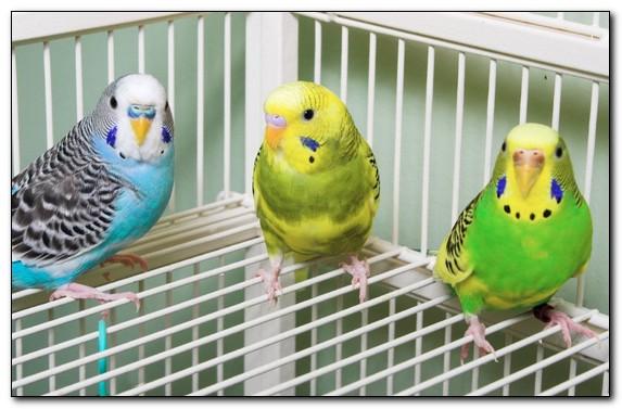Что должно быть в клетке у попугая