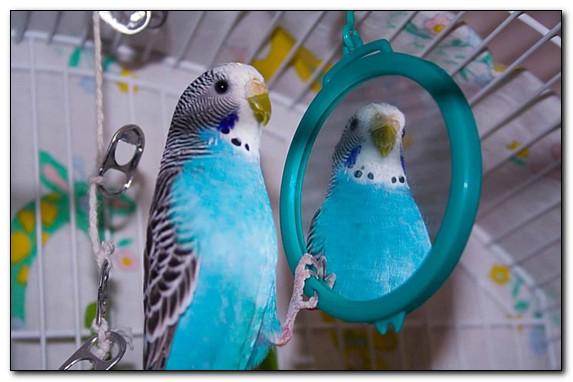 Что нужно в клетке попугаю