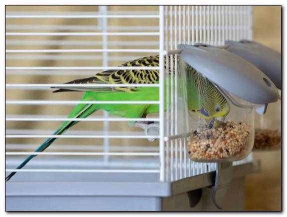 Как обустроить клетку для попугая