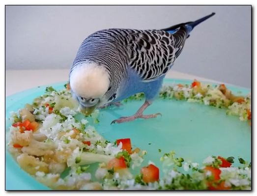 Кормление и рацион волнистого попугая