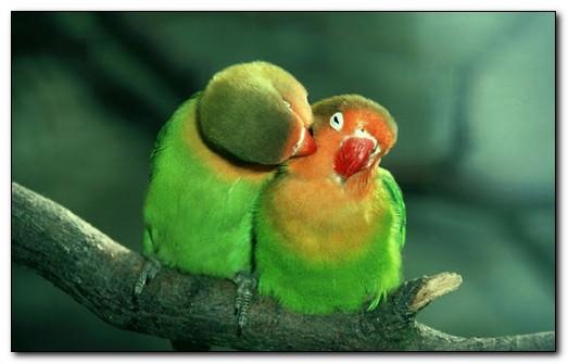 Какую птицу можно завести дома?