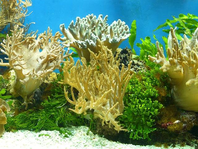 Какие лампы лучше для аквариума