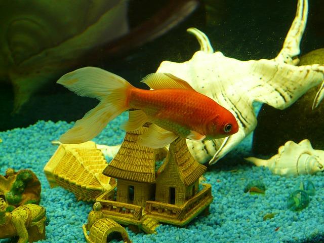 Какие лампы лучше для растений в аквариуме