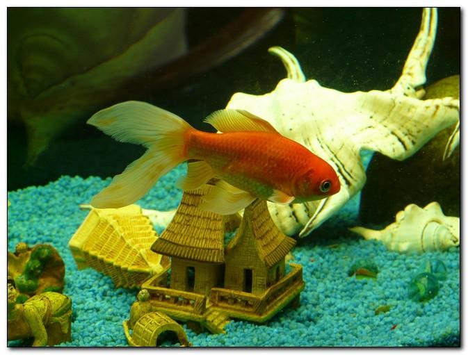 как заменить грунт в аквариуме