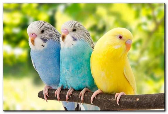 какие витамины необходимы для попугая
