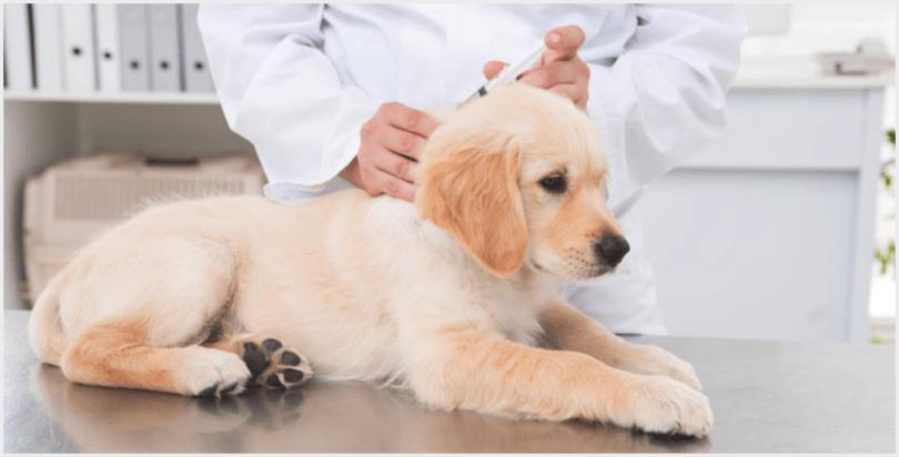 прививка от бешенства в холку собаке