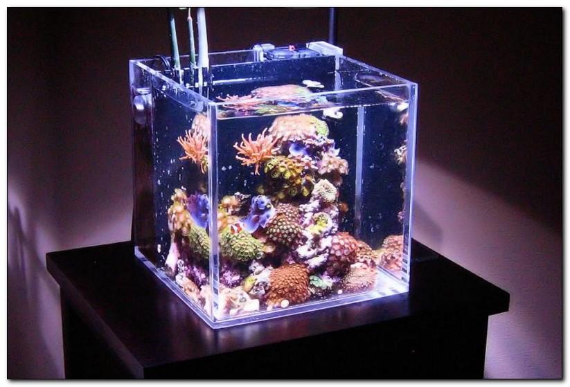 характеристика аквариума и оборудование