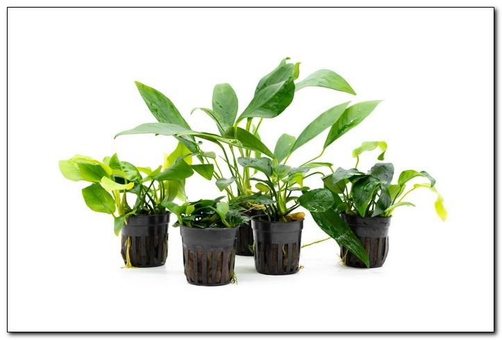 какие растения посадить в новый аквариум