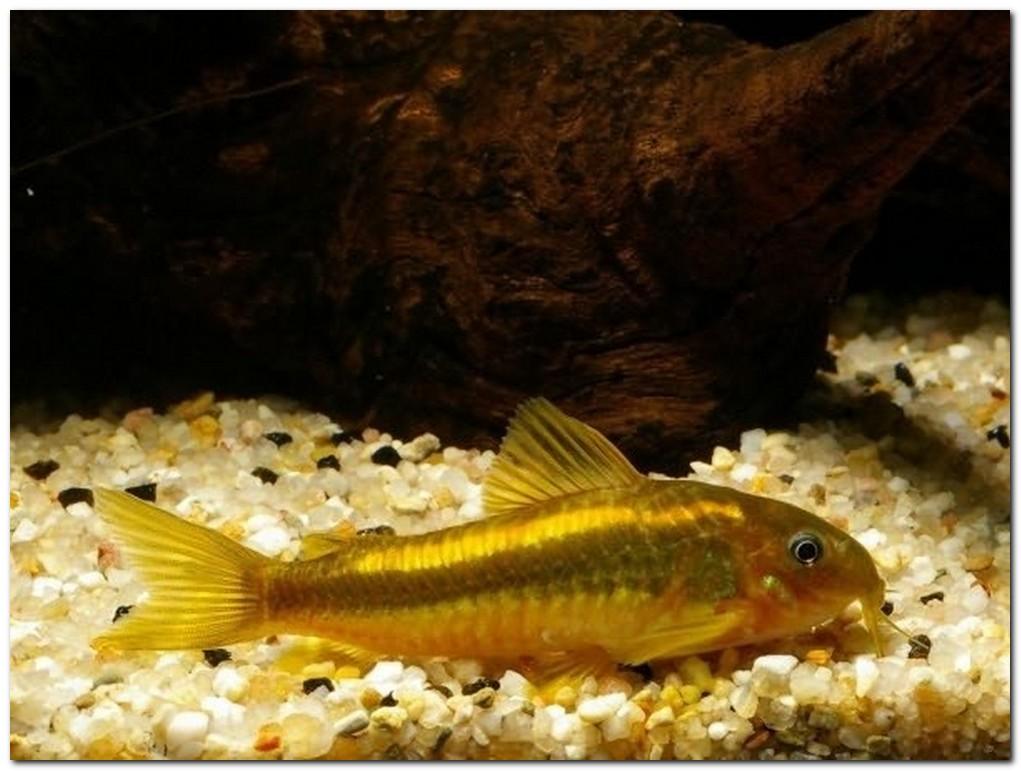причины заболеваний рыб